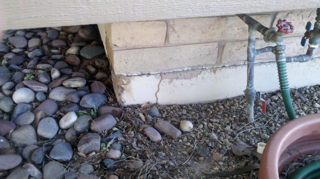 termites on block wall home